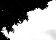 immagine-9